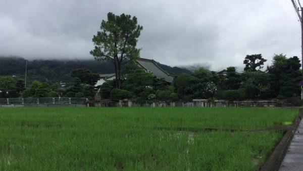 長善寺を訪ねる 相模国大友郷 小田原 神奈川